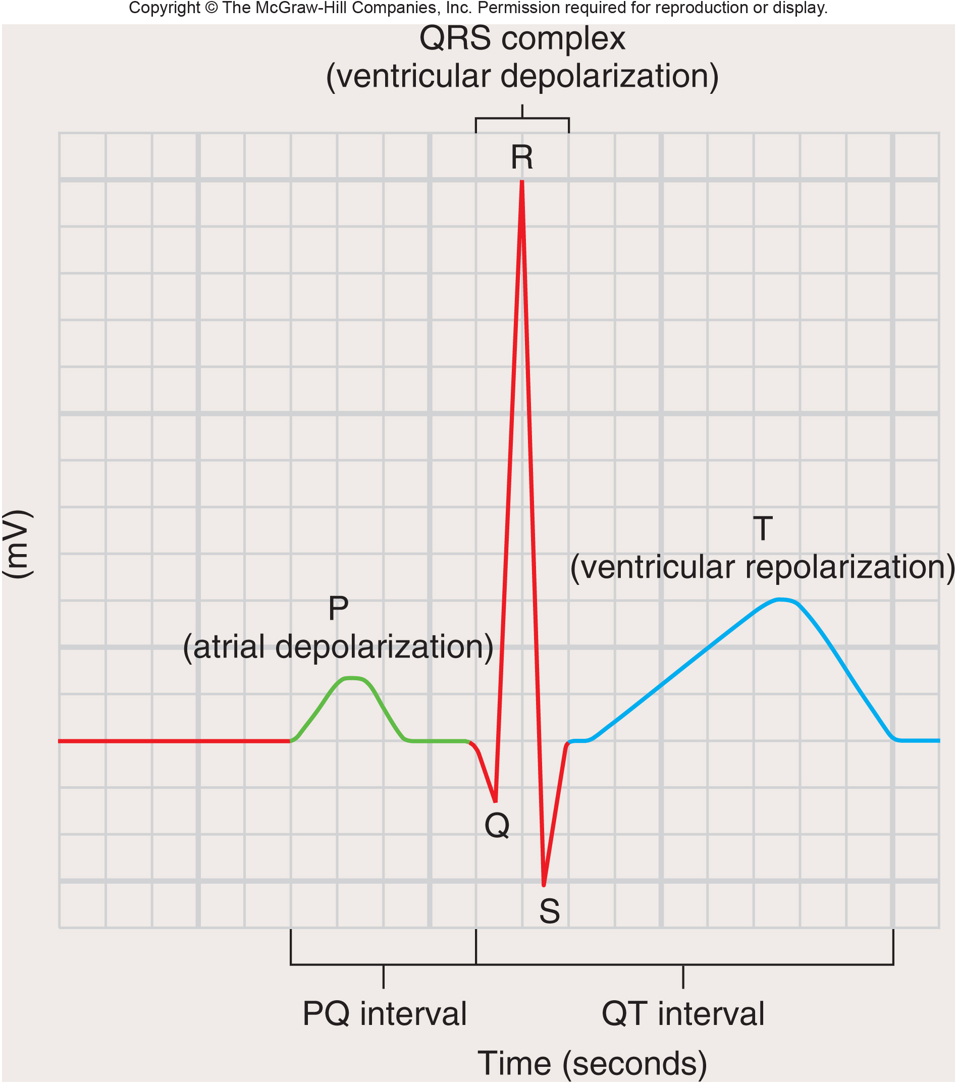 Conduction system and pacemaker an ecg is a record of electrical changes during each cardiac cycle pooptronica